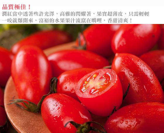小蕃茄/水果/番茄
