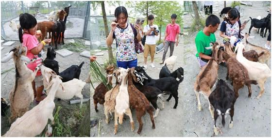 【葛玛兰休闲农场】园区内有许多可爱的动物,等著你与他们见面!