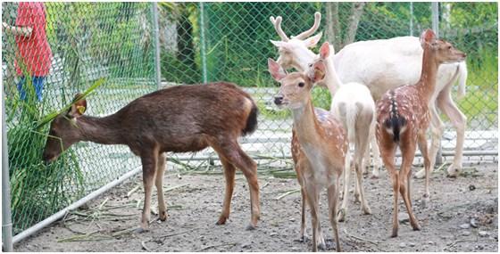 可爱动物大集合-假日!