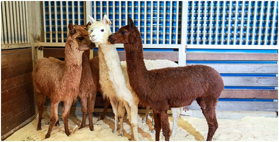 葛玛兰休闲农场-体验亲子休闲可爱动物大集合-假日!的