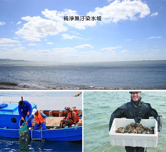 16p鲍鱼_4xl活冻巨大鲜肥鲍鱼,宅配,冷冻/生鲜蔬果,快速出货()