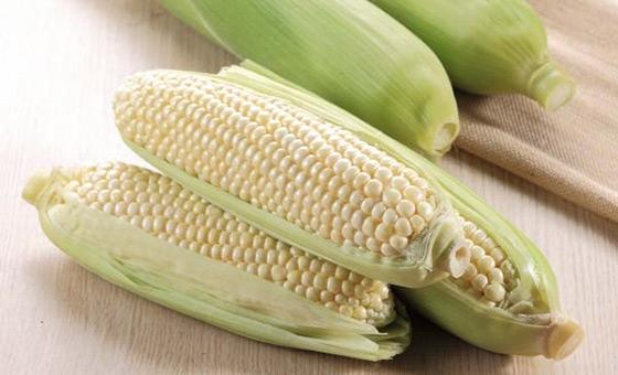 水果玉米_鲜绿农产/18度高甜度白美人水果玉米/水果玉米/甜玉米/玉米