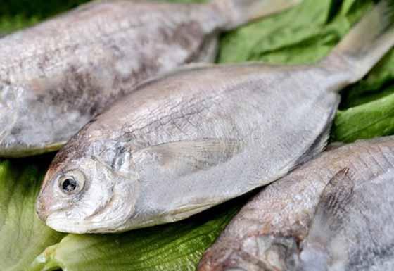 肉魚-2-500x344.jpg