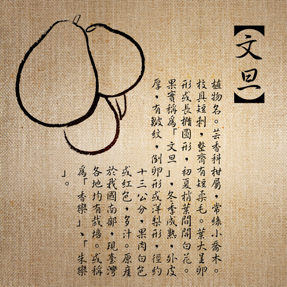 花蓮/鶴岡/花蓮鶴岡40年老欉文旦/文旦/柚子/老欉/禮盒/伴手禮