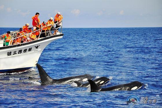 碧海蓝天下与鲸豚相伴逐浪花!