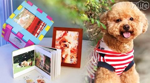 飛魚影像美術館-狗狗寵物寫真