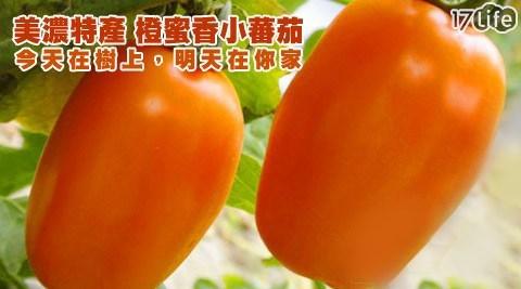 高雄美濃橙蜜香小蕃茄5斤裝