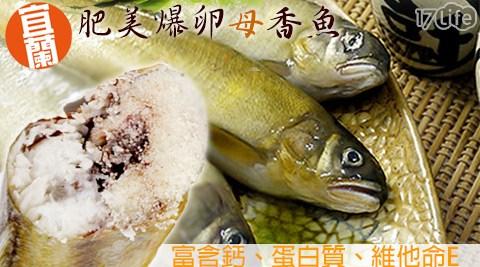 平均每隻最低只要56元起即可享有【日丸水產】嚴選宜蘭爆卵母香魚1隻/20隻/30隻/40隻/60隻/100隻(100g±10%/隻),購滿10隻免運。