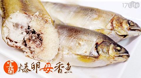 日丸水產-嚴選宜蘭特大爆卵母香魚