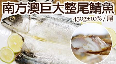 平均每尾最低只要58元起即可購得約39公分南方澳巨大整尾鯖魚:1尾/12尾/20尾(450g±10%/尾),購滿6尾可享免運優惠!
