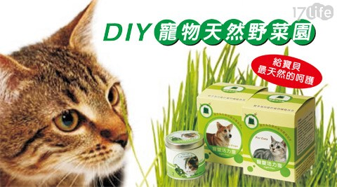 迎光-DIY寵物天然野菜園