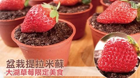 平均每入最低只要35元起(含運)即可享有【木匠手作】大湖草莓限定美食-盆栽提拉米蘇10入/20入/30入/50入/80入/100入(10入/盒)。