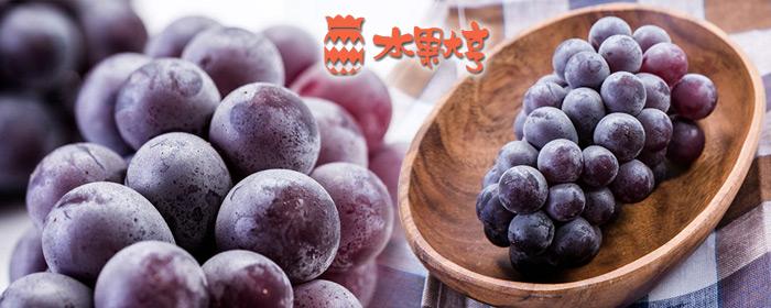 水果大亨-台灣巨峰葡萄禮盒 台灣黑紫玉巨峰葡萄,老饕果物珍品!碩大甜美均勻飽滿的紫黑果實,豐郁多汁限期賞味!