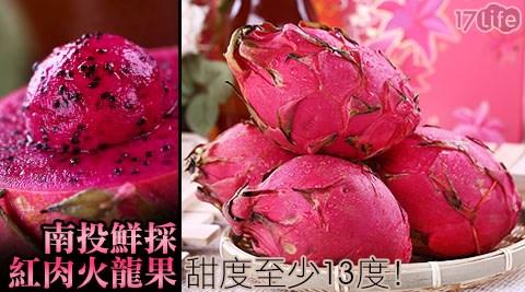 紅肉火龍果/火龍果/水果