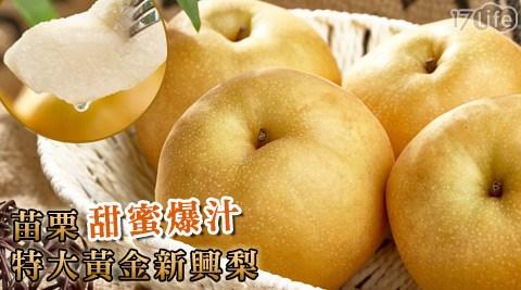 黃金梨/高接梨/新興梨/苗栗/爆汁/中秋禮盒