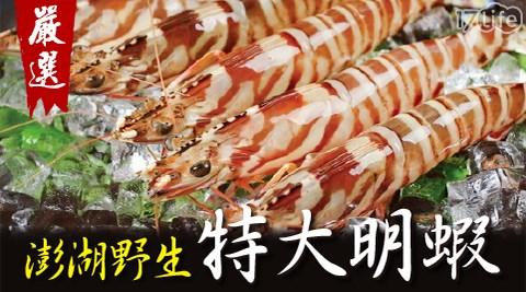賀鮮生-澎湖野生鮮凍超大明蝦