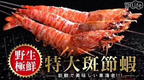 賀鮮生-野生極鮮特大斑節蝦