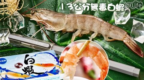 飧溢鮮-產地直送現撈活凍13公分大Size無毒白蝦