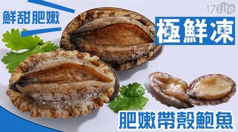 平均最低只要65元起(含運)即可享有極鮮凍進口肥嫩帶殼鮑魚平均最低只要65元起(含運)即可享有極鮮凍進口肥嫩帶殼鮑魚:10顆/20顆/40顆/60顆(10顆/包)。