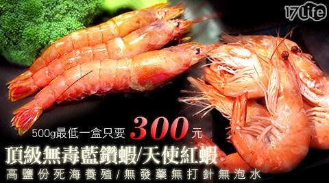 頂級無毒藍鑽蝦/天使紅蝦