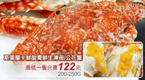斯里蘭卡鮮甜膏鮮生凍母/公花蟹