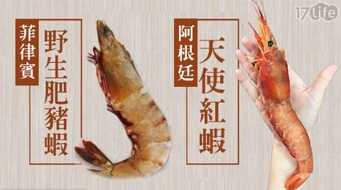 築地一番鮮/巨無霸/天使紅蝦/野生/鮮Q/肥豬蝦/蝦子/海鮮/生猛海鮮/阿根廷蝦