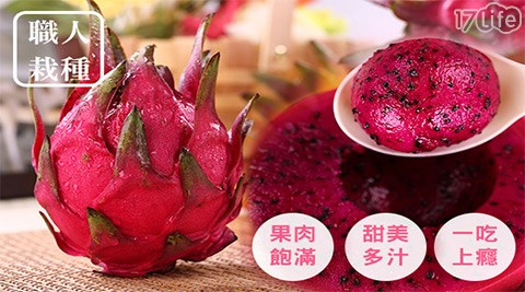 平均每斤最低只要100元起(含運)即可購得【綠手指農場】火龍果達人栽種-鮮甜紅肉火龍果5斤/10斤/20斤。