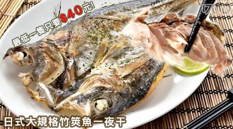 日式大規格竹筴魚一夜干