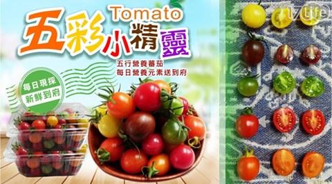 平均每盒最低只要199元起(3盒免運)即可購得開運良食-溫室栽培五彩小精靈番茄1盒/6盒/9盒/12盒(600g±10%/盒)。