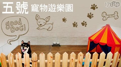 五號寵物遊樂園-小型犬住宿專案