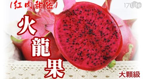 產地鮮採直送-頂級甜美紅肉火龍果5斤裝