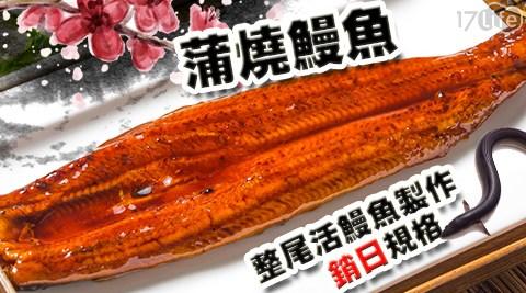 每日一物/金鮮/大尾/頂級/直銷/日本/整尾/蒲燒/鰻魚