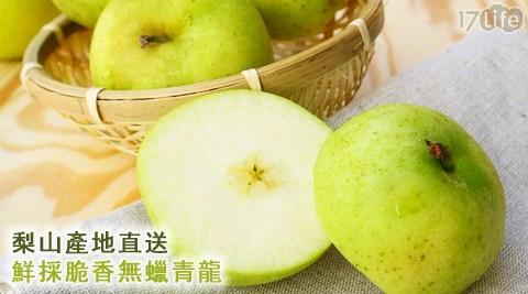 梨山/產地/無蠟/青龍/無腊/水果/脆/產地/養生/美食/食補/冬天/蘋果