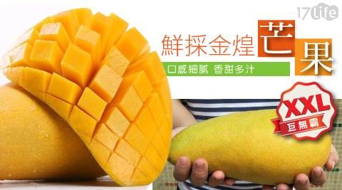 平均最低只要55元起(含運)即可享有【果之蔬】超大巨無霸XXL鮮採金煌芒果(5-7顆/約10斤/箱) :10斤/20斤/40斤。