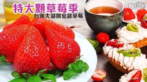 特大顆/草莓季/草莓/台灣/大湖/苗栗/網室/甜草莓/鄒頌/水果/禮盒/送禮/伴手禮/草莓控/中高價