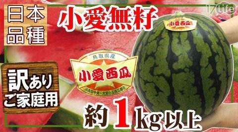 日本品種溫室吊網小愛少籽紅肉西瓜(1.5台斤/顆)