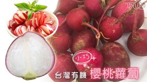 平均最低只要179元起(含運)即可享有台灣有機 小巧櫻桃蘿蔔:2盒/4盒/6盒/8盒/12盒。