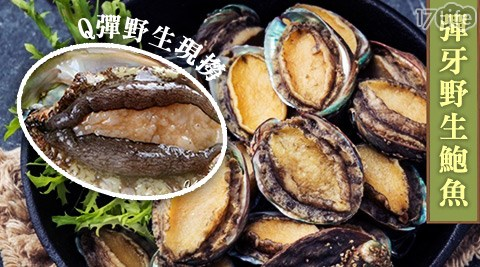 黃金/頂級/超嫩/彈牙/野生/鮑魚/海產/海鮮