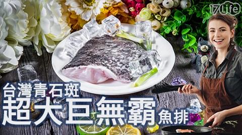 台灣/青石斑/超大/巨無霸/魚排