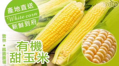 雲林/麻園農場/有機/黃色甜玉米/玉米/黃色玉米