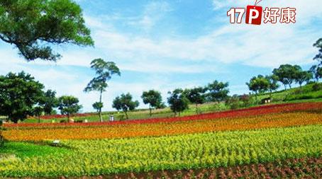 17公顷花海景观,还有牧场与diy体验,更有异国美食等著您!