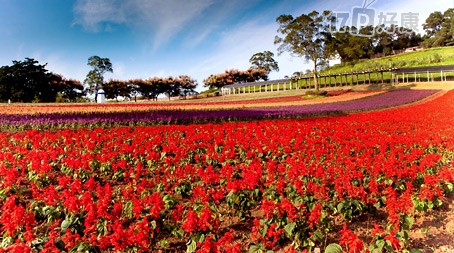 大溪花海农场-门票乙张-台湾北部最大花卉农场!图片