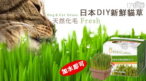 日本/Green Labo/DIY/新鮮貓草/新鮮/貓草/貓咪/草/寵物/盆栽