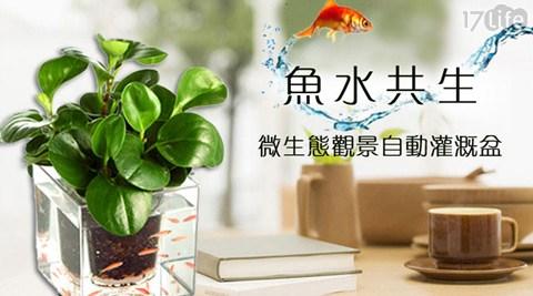 魚水共生/微生態/魚/養殖/觀景/自動/灌溉盆/盆栽