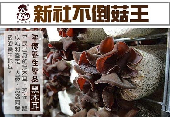 不倒の菇/養生/黑木耳露/新社/養顏/台灣