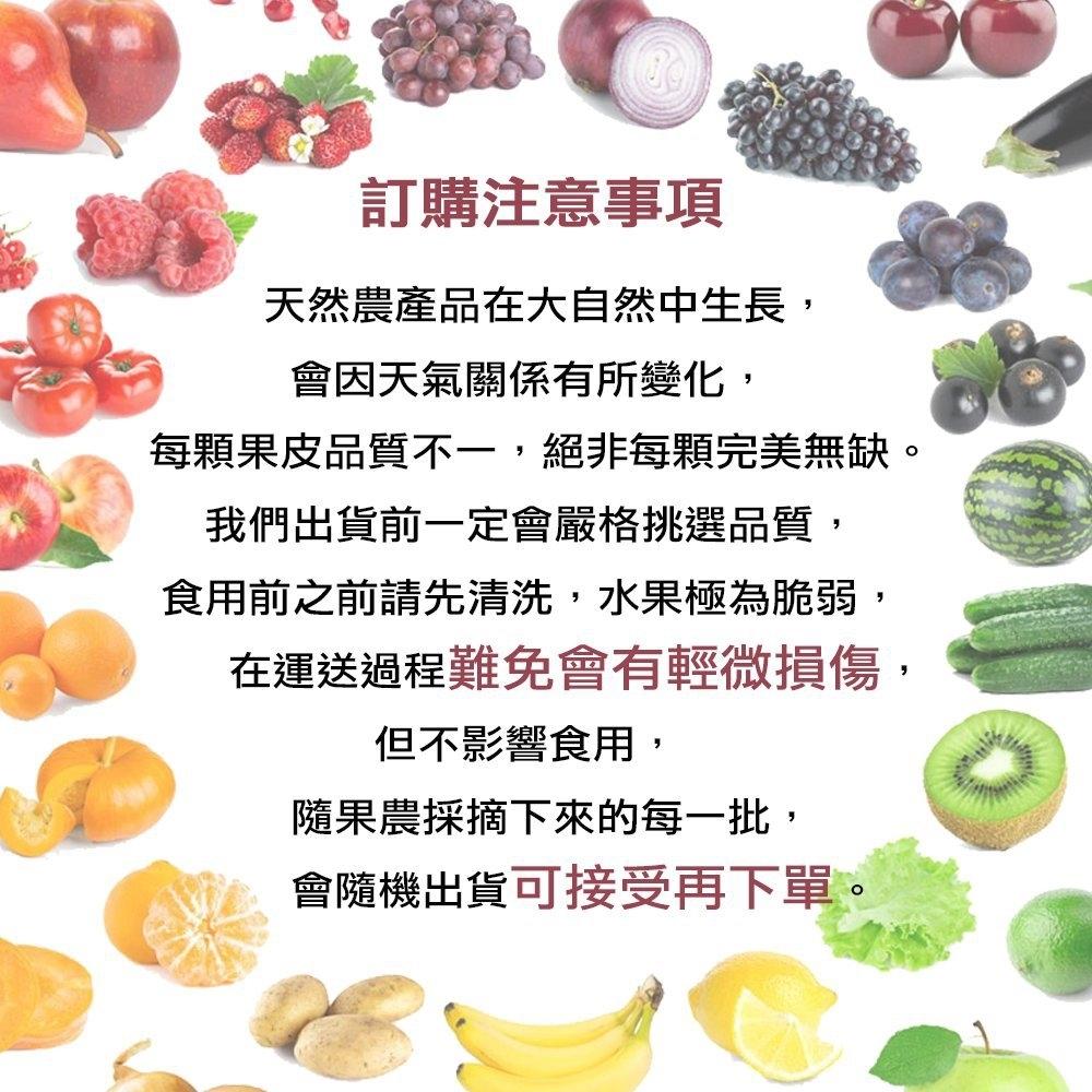 水果/哈密瓜/腸胃/消化/台南/七股/台灣/在地/溫室/網紋牛奶紅肉哈密瓜
