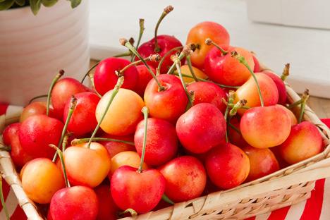 「智利 白櫻桃」的圖片搜尋結果