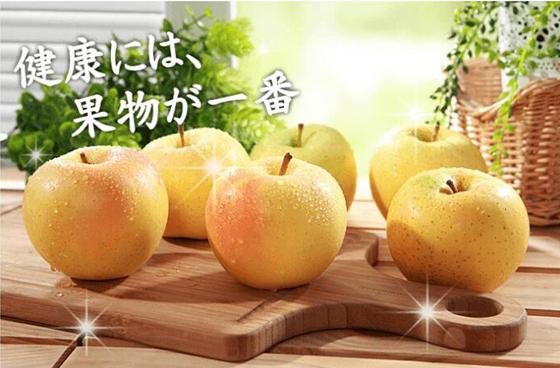 日本青森/Toki/水蜜桃蘋果/水果/青森縣/蘋果/秋季