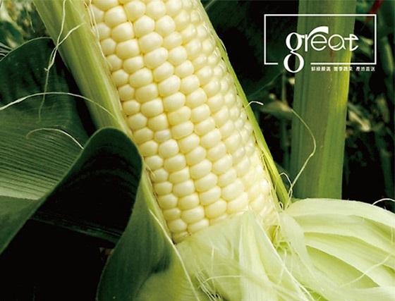 鮮綠農產/18度/白美人/水果玉米/蔬菜/火鍋/食材/午餐/即食/晚餐/點心/燒烤/烤肉/鍋物