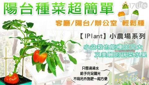 療癒/盆栽/輕鬆種/小農場/農場/開心農場/種菜